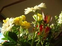 20051223_flower_1