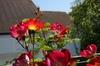 20070430_flower_5