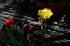 20070430_flower_6