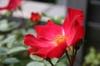 20070430_haru_flower_1