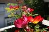 20070430_haru_flower_3
