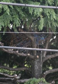 20080517_crow_nest