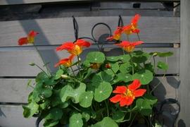 20080517_flower_2