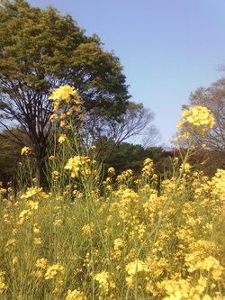 20090419_flower