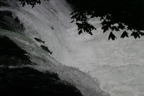 20100731_3_sakuranotaki