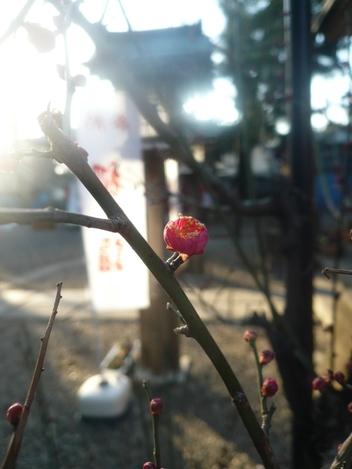 20110111_plum