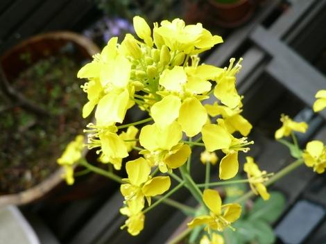 20110320_spring_flower_2