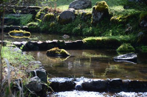 20120506_green14