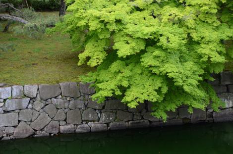 20120506_green2